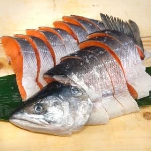 新時鮭1.9kgが入荷 ! 小ぶりながら秀逸