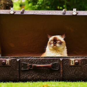 【カンタス航空】サイズに注意!スーツケースの選び方