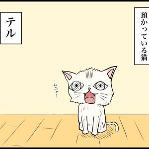 猫が気まぐれすぎて正直引く