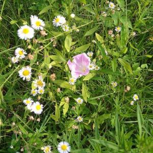 道なりの花--2