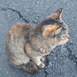 道なりの猫どん--2
