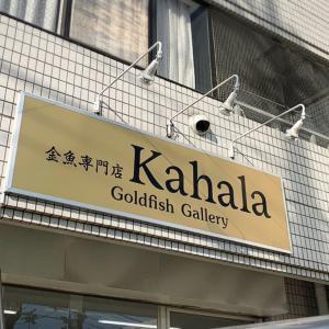 有名金魚店