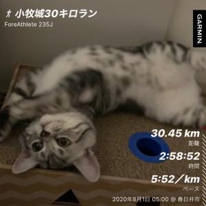 梅雨明けの8月ラン with アビちゃん(小猫)