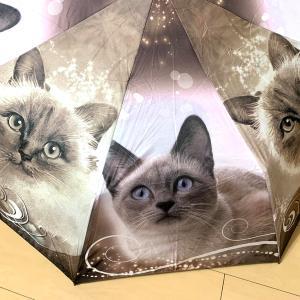ネコ大好きの傘♡