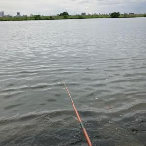 ホソで小鮒釣り 河川でハヤからの〜