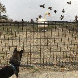 昆陽池公園に犬連れで初めて行って来ました☆