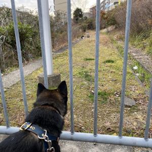 散歩中に猫と遭遇したけど飼い主がビビった理由