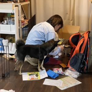 この時期、暇をもてあます時間で犬と人の防災準備を。