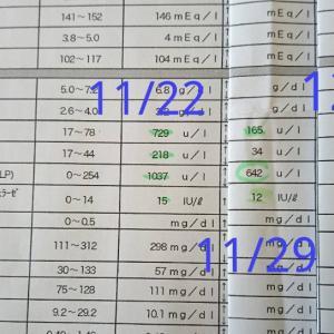 アンディ通院の日&カーラの健康診断結果