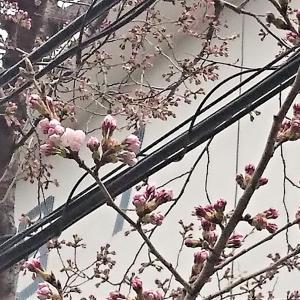 わんこたち春の予防へ