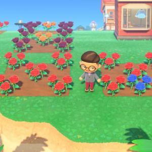 【あつまれどうぶつの森】青いバラ作りはたいへん!! 作り方を丁寧に解説 しゃちょーのあつ森日記  就任3日目