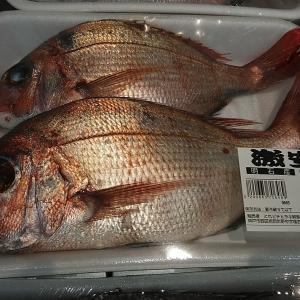 魚の値段に驚きです