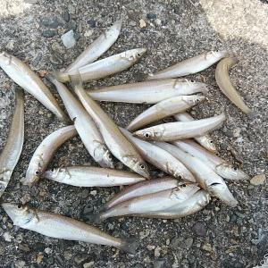 高砂釣行2