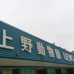 上野動物園♥️