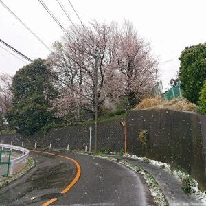 やっぱり桜の時期なので・・・