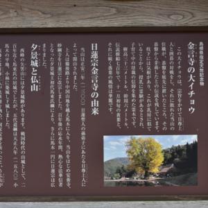 金言寺の大銀杏