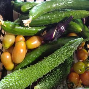 夏野菜と玄米。