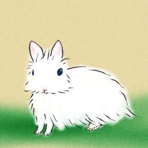うさぎ辞典|ジャージーウーリー 小さな身体の長毛種 【うさぎの品種をイラストで紹介】