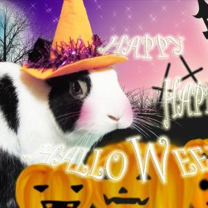【10月31日】今日の長十朗さん ちょーちゃんのハロウィンパーティ♪