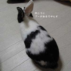 【11月12日】今日の長十朗 ニセモノ登場?②