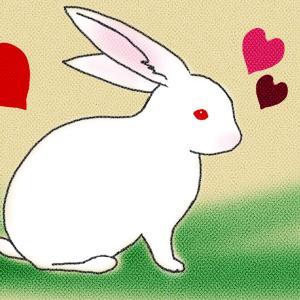 【うさぎ辞典】 ジャパニーズホワイト(日本白色種) 【うさぎの品種をイラストで紹介】