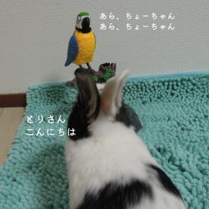 【11月14日】今日の長十朗さん|とりさんに贈り物 【ウサギ 写真】