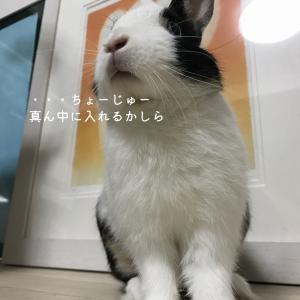 【11月29日】今日の長十朗さん 仲良し 【うさぎ 写真】