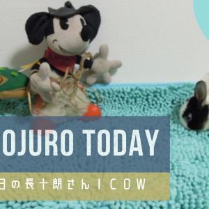 【12月8日】今日の長十朗さん COW 【うさぎ 写真】