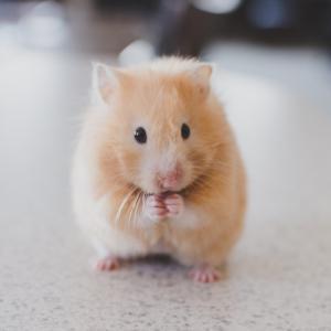 小さい人だけでなく、小さい動物にもテルミー