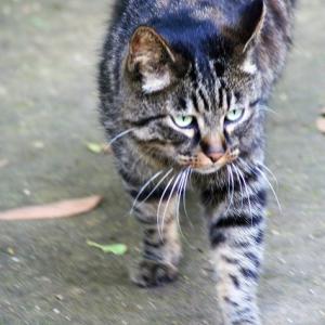 江の島の猫!!