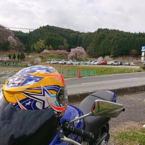 奈良県宇陀市の又兵衛桜