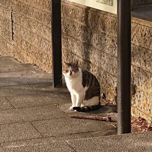 埼玉にて…公園の野良猫3