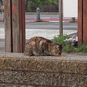 埼玉にて…公園の野良猫4