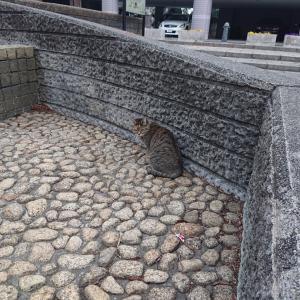 埼玉にて…公園の野良猫5