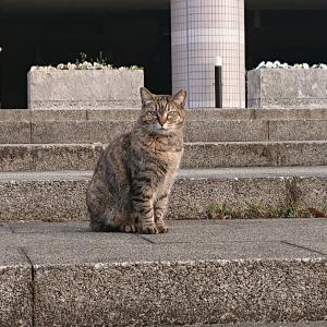 公園の野良猫の名前