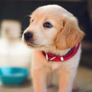犬と暮らす家の知っておきたい知識とは