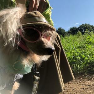 【おしゃれDog】鴨親子【保護犬トイプードル】