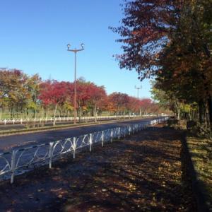 台風が去って秋がまた一つ深まる日