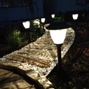 照らされた夜の庭もまた美しい