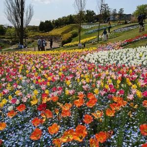 「昔のおでかけシリーズ」春のおでかけはお花いっぱいの淡路島がおすすめ