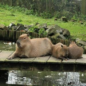 カワスイ川崎水族館の見どころは?カピバラ、ナマケモノなど魚以外も!
