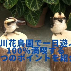 掛川花鳥園で一日遊ぶ!100%満喫する3つのポイントを紹介