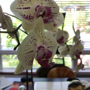 お花パワーSomething to lift your mood!