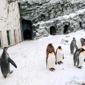 冬の3歳子連れ旭山動物園訪問記(ペンギン散歩してなかった)