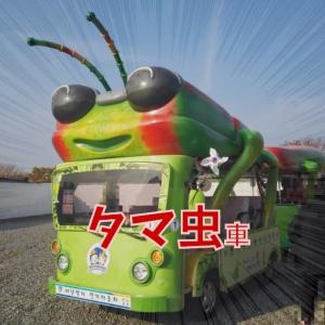 慶州 瞻星台 タマムシ車とピンクミューリー