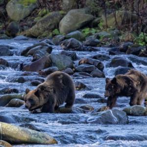 熊の駆除に反対する愚か者に苦言を呈したい