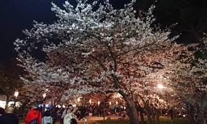 2020 桜花賞予想