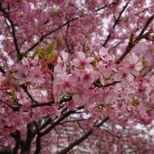 一足早い春を発見