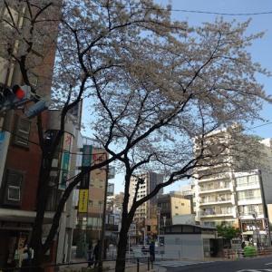 桜の時期がやってきました。