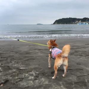 あっという間の2が月(8月3日うちの仔記念日 海散歩)